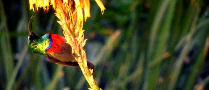 Watch the birdy: A Garden Gem! – A Tale Unfolds