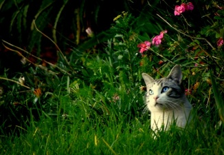 Kitty in the long grass
